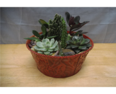 Succulent Dish Garden *Small* in Athens, Georgia, Flowers, Inc.