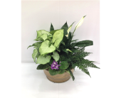 Medium Dish Garden  in Smyrna GA, Floral Creations Florist
