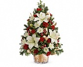 Teleflora's Golden Pines Tree in Dallas TX, Petals & Stems Florist