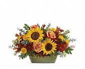Teleflora's Sunflower Farm Centerpiece in Johnstown NY, Studio Herbage Florist