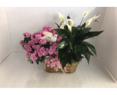 Azalea Peace Lily Planter in Smyrna GA, Floral Creations Florist