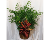 Neantha Bella Palm in Grand Rapids MN, Shaw Florists