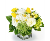 Always in Fort Worth TX, Greenwood Florist & Gifts