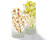 Cymbidium in Fort Worth TX, Greenwood Florist & Gifts