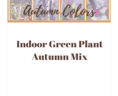 Indoor Green Plant Autumn Mix in Eau Claire WI, Brent Douglas