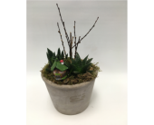Succulent Fairy Garden in Belleville ON, Live, Love and Laugh Flowers, Antiques and Gifts