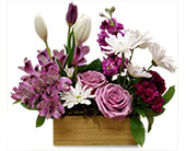 Shades of Lavender in Fort Worth TX, Greenwood Florist & Gifts