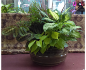 Dishgarden- 12-inch pot in Islip NY, Flowers by Chazz