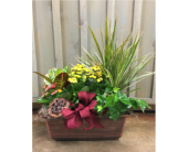 Stylish Plant Assortment in Austin TX, Ali Bleu Flowers