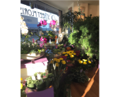 Our Store in Courtenay BC, 5th Street Florist