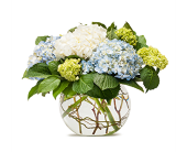 Hamptons Hydrangea in East Quogue NY, Roses And Rice