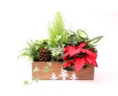 Christmas in a Box in Grimsby ON, Cole's Florist Inc.