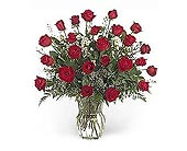 Stein Two Dozen Red in Burlington NJ, Stein Your Florist