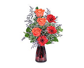 Scarlet Crush in Methuen MA, Martins Flowers & Gifts