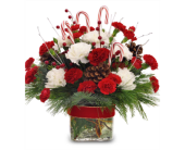 Candy Cane Celebration in Savannah GA, John Wolf Florist