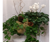 Ivy & Cyclamen Combo in Grand Rapids MN, Shaw Florists
