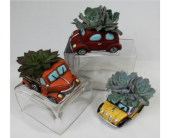 Small Succulent Car