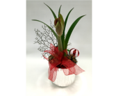 Holiday Amaryllis in Belleville ON, Live, Love and Laugh Flowers, Antiques and Gifts