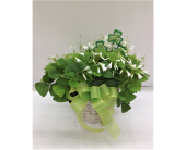 Lucky Shamrock Plant in Smyrna GA, Floral Creations Florist
