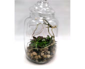 Succulent Terrarium in Belleville ON, Live, Love and Laugh Flowers, Antiques and Gifts