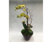 Orchid/Succulent Planter in Belleville ON, Live, Love and Laugh Flowers, Antiques and Gifts