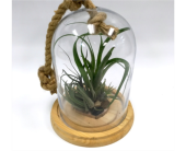 Air Plant Tabletop Globe in Belleville ON, Live, Love and Laugh Flowers, Antiques and Gifts
