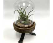 Rustic Airplants in Belleville ON, Live, Love and Laugh Flowers, Antiques and Gifts