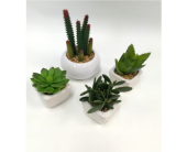 Artificial Succulents in Belleville ON, Live, Love and Laugh Flowers, Antiques and Gifts