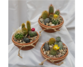 Cactus Garden in Grand Rapids MN, Shaw Florists