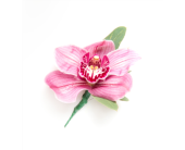 Cymbidium Orchid Boutonniere in Little Rock AR, Tipton & Hurst, Inc.