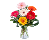 Canton - Canton Gerbera Twist in Canton TX, Billie Rose Floral & Gifts