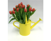 Showering Tulips in Belleville ON, Live, Love and Laugh Flowers, Antiques and Gifts