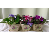 Violet Trio in Kennett Square PA, Barber's Florist Of Kennett Square