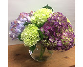 Colorful Hydrangeas in Manhasset, New York, Town & Country Flowers