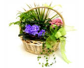 Spring Garden Basket in Eugene OR, The Shamrock Flowers & Gifts