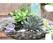Decorative Succulent Bowl in Cincinnati OH, Robben Florist & Garden Center