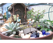 Fairy Gardens  in Cincinnati OH, Robben Florist & Garden Center