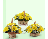 Simply Daisies in Southfield MI, Thrifty Florist