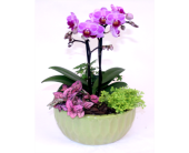 MultiFlora Orchid Garden in Grimsby ON, Cole's Florist Inc.
