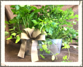 Patio Delicious Fresh Herbs Mix in Kimberly WI, Robinson Florist & Greenhouses