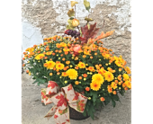 Garden Mum Gift in Dayton OH, Furst The Florist & Greenhouses