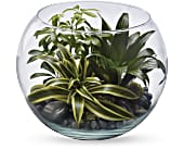 Sphere Of Tranquility Terrarium, picture