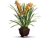Teleflora's Regally Yours Orchid, picture