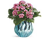 Teleflora's Blooming Gem Kalanchoe Plant, picture