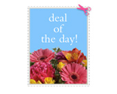 Deal of the Day in Sheboygan, Wisconsin, The Flower Cart LLC