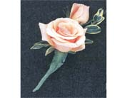 Boutonniere in Rocky Mount NC, Flowers and Gifts of Rocky Mount Inc.
