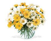 Walter Knoll's Dashing Daisies Bouquet in St. Louis MO, Walter Knoll Florist