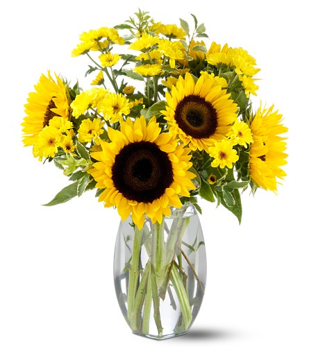 Teleflora's Sunflower Splash in DeKalb IL, Glidden Campus Florist & Greenhouse