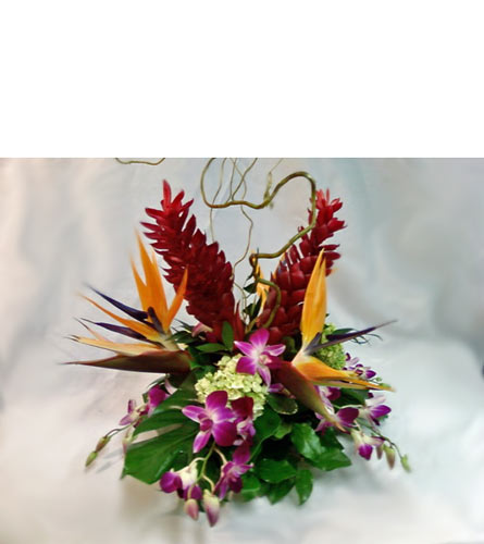 Island Breeze in Naples FL, Gene's 5th Ave Florist