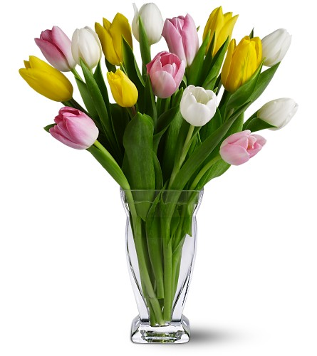 15 Mixed Tulips in Broomall PA, Leary's Florist
